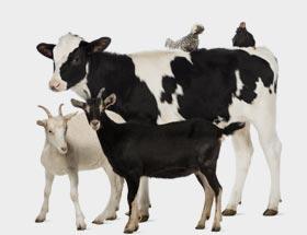 Κτηνοτροφικά